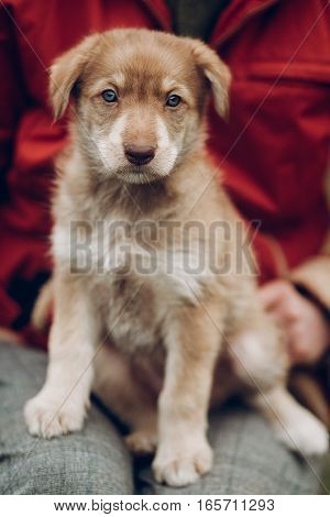 Adorable Brown Puppy With Amazing Blue Eyes Sitting On Woman Legs On Background Of Autumn Park. Spac