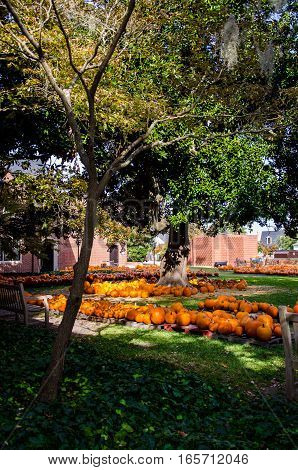 MANY PUMPKINS ARRANGED IN A CITY PARK UNDER A LARGE TREE