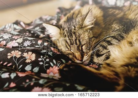 Cute Brown Tabby Sleeping On Bed, Adorable Sweet Moment, Space For Text