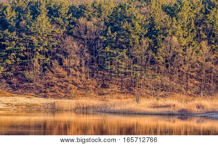 Landscape of a cove with trees and evergreens bathed with sunlight