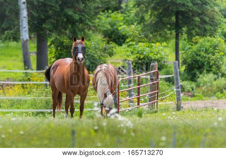 Two horses with blindfolds grazing & relaxing in springtime summer meadow.  Mesh blindfolds allow the horse to see whilst protecting the animal's eyes from horsefly bites.