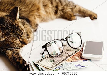 Cute Cat Sitting Sleeping On Table With Glasses Phone And Money, Working Home Or Shopping Online Con