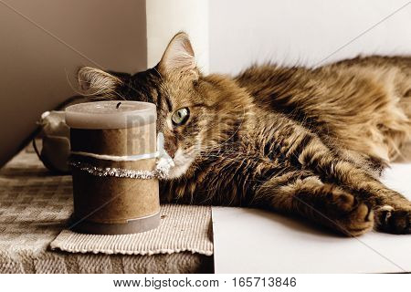 Cute Cat Sitting On Table Looking With Interesting Eye, On Table With Candle, Playful Mood, Space Fo