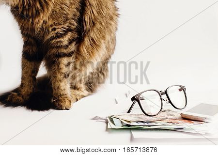Cute Cat Sitting On Table With Glasses Phone And Money, Working Home Or Shopping Online Concept, Spa