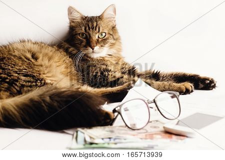 Cute Cat Sitting On Table With Glasses Phone And  Money, Working Home Or Time For Vacation Concept,