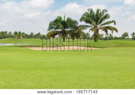 beautiful palm tree in golf course with sand bunker and lake