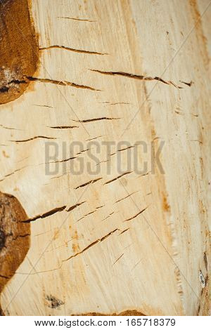 slice of wood sawn off with a chain saw