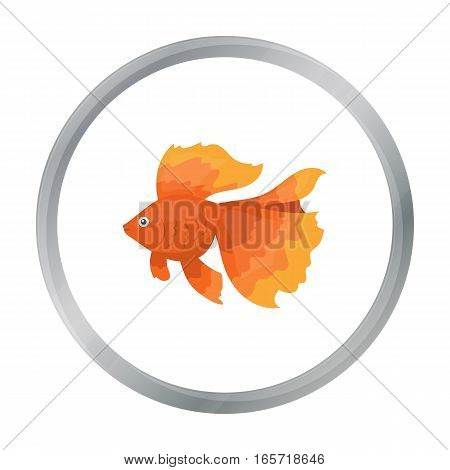 Gold fish icon cartoon. Singe aquarium fish icon from the sea, ocean life cartoon. - stock vector