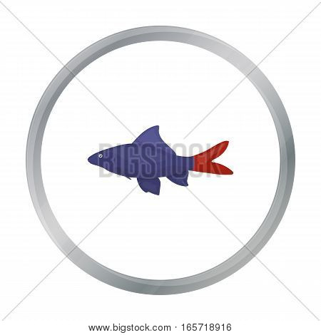 Red Tail Shark fish icon cartoon. Singe aquarium fish icon from the sea, ocean life cartoon.