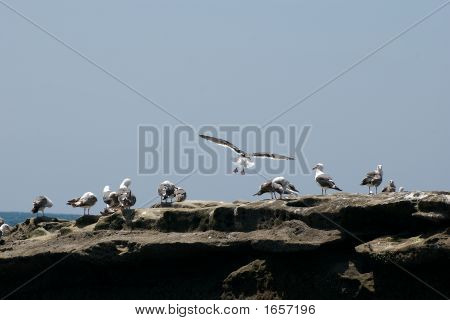 Birds On The Rock