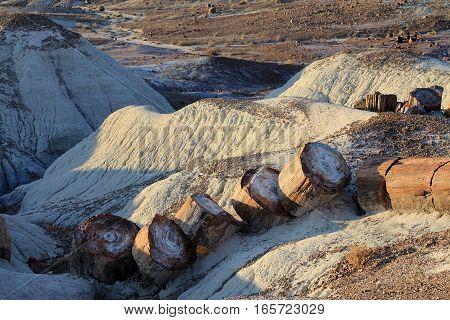 The national park Petrified forest in America