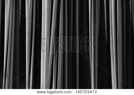 Black And White Curtain In The Theatre.