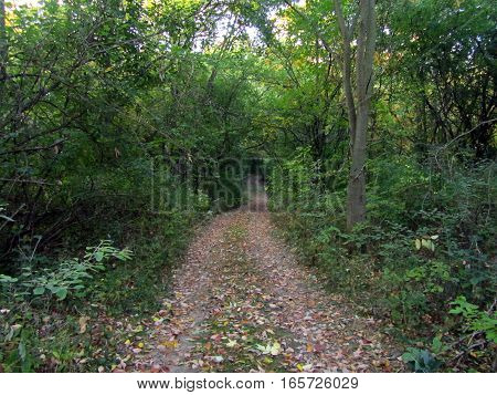 a path through the woods on a summer morning