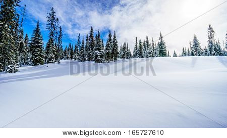 Deep Snow Pack in the High Alpine in a Winter Landscape on the Ski Hills of Sun Peaks in the Shuswap Highlands of central British Columbia, Canada