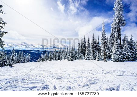 Winter Landscape with Snow Covered Pine Trees in the High Alpine on the Ski Hills in the Shuswap Highlands of central British Columbia, Canada
