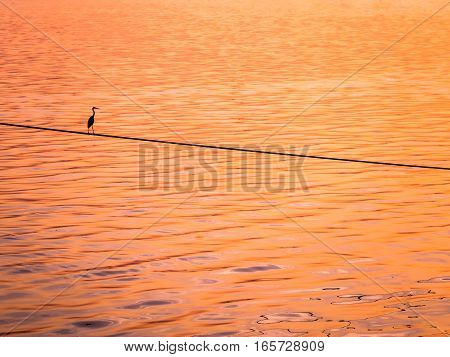 Little Chinese egret bird perched on a rope over the sea in sunset light