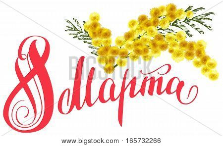 March 8 translation from Russian. Yellow mimosa flower branch. Lettering text for greeting card
