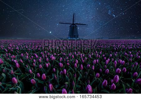Night Field Of Tulips And Windmill