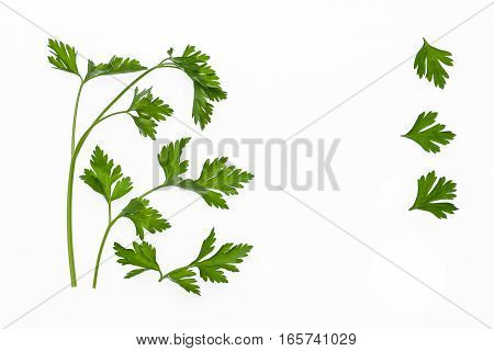 parsley leaves and stalks on white background