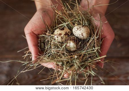 Hands with nest and quail eggs flat lay. Top view on human holding tiny eggs with straw, wooden background. Nature, countryside, birds, spring, new life concept