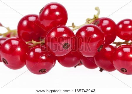 Fruits of redcurrant on a twig in white background close up.