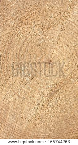 Wood Rings - Vertical