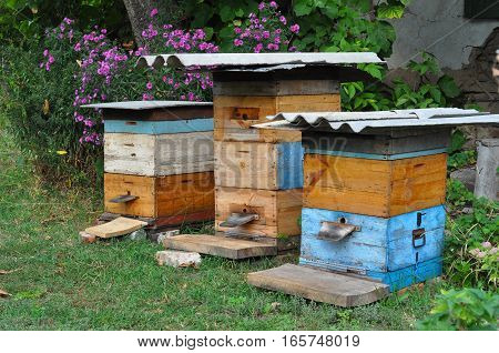 Cozy Old Rural Wooden Beehives in the Garden and Aster amellus flowers background in autunm. Wooden Beehives