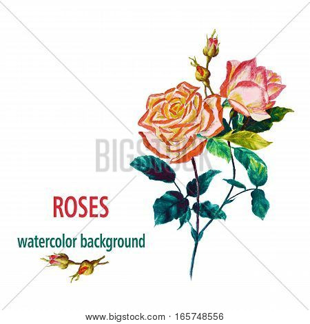 Flowers rose with leaves watercolor illustration for congrats