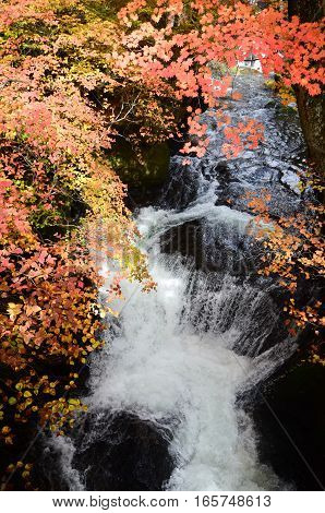 Waterfall flowing with autumn leaves foreground, Japan
