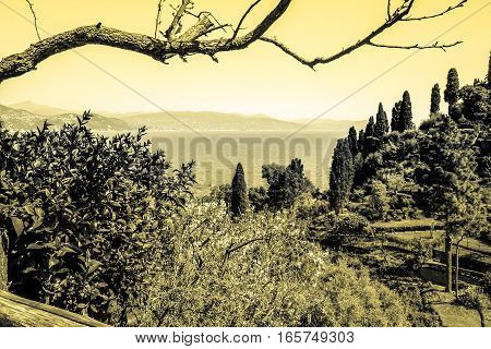 Olive groves in Italy vintage sepia tone photography.