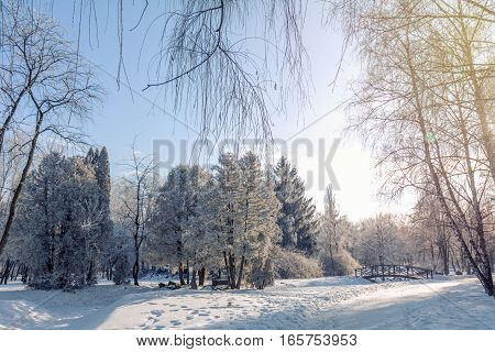 Winter Landscape Of Frosty Trees And Blue Sky