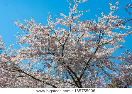 Beautiful fascinating spring scene with blue sky.