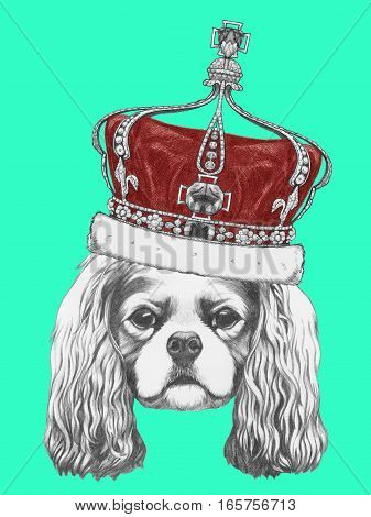 Portrait of Cavalier King Charles Spaniel with crown. Hand drawn illustration.