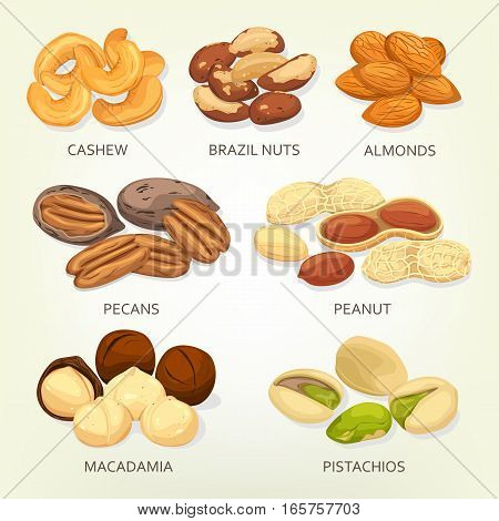 Nuts and seeds, beans and grains isolated. Cashew or chick-pea, brazil nut and almond, pecan or mexico hickory, peanut or goober, groundnut, macadamia and pistachio. Cellulose vegetarian nutrition