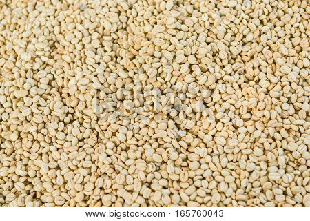 Close up shot of unroasted coffee beans background. Shoot with natural morning light.