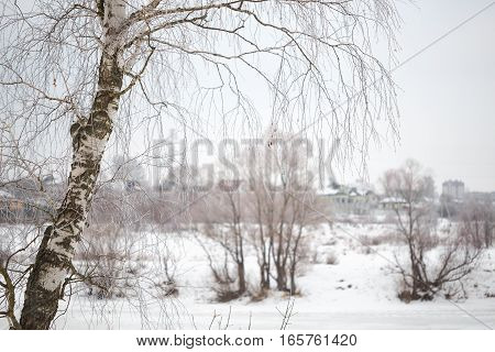 Aspen trees in winter white background abstract composition