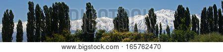Andes & Treeline, Lujan de Cuyo, Mendoza