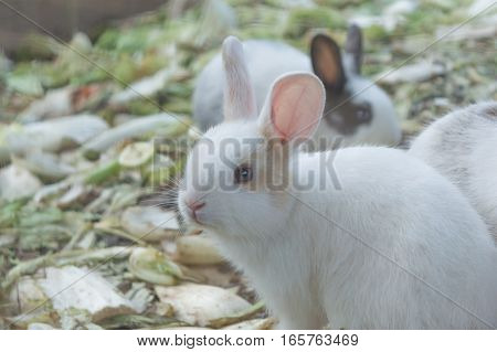 Rabbit out of tree roots. White rabbit