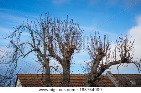 Abstract treetops in front of house rooftops