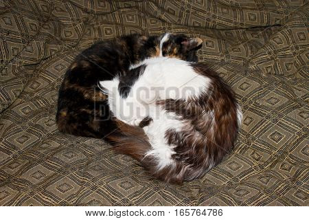 Two cats sleeping together on a bed
