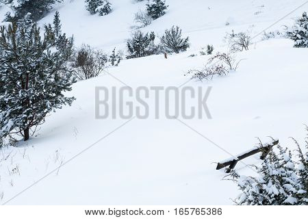 Bench shrubs and spruce under the snow. Winter idyllic landscape.