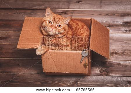 Ginger cat lies in box  on wooden background in a new apartment. Fluffy pet is doing to sleep there. Keys to new home