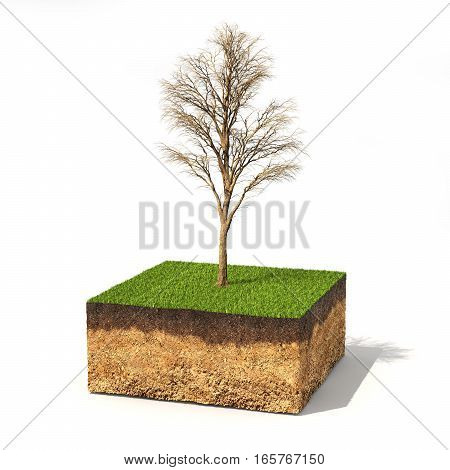 Eco concept. Cross section of ground with tree without leaves on a white. 3d illustration