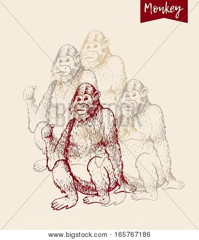 Poster of monkeys. Vector illustration. Hand drawn sketch of young orangutan smile, monkey is sitting on its ass and finger is pointing back. Goodbye 2016. Vintage engraving style.