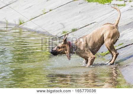 dog shaking off water. when they crawled from the water.