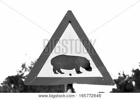 In South Africa Close Up Of The Hippopotamus  Sign