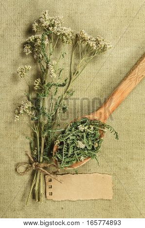 Yarrow. Dried herbs for use in alternative medicine spa herbal cosmetics herbal medicine preparing infusions decoctions tinctures powders ointments butter tea bath.