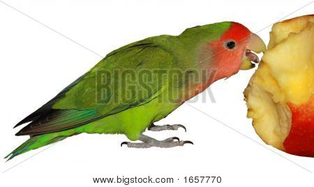 Parrot Eat Apple