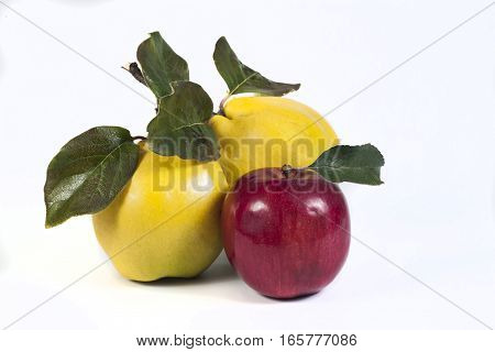 apple isolated on a white backgraund (fruits)