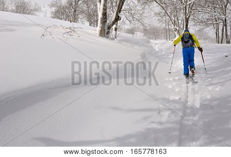 skier climbing in fresh snow with ski touring across forest